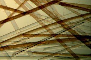 Digitale microscoop zoom detail haren